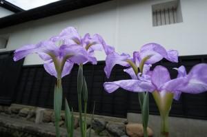 飛騨古川の白壁土蔵と花