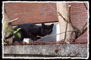 フォトコラム「黒猫にっき」第2巻  〜 黒猫爺ぃさん 〜