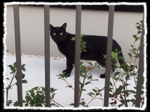 フォトコラム「黒猫にっき」第3巻〜 逢いたい 〜