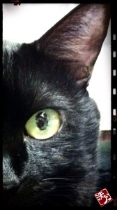 フォトコラム「黒猫にっき」創刊だぁ〜(=^ェ^=)〜