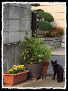 フォトコラム「黒猫にっき」第4巻 〜 別れ刻 〜