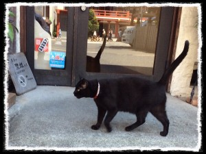 フォトコラム「黒猫にっき」第7巻〜 黒猫のボス 〜