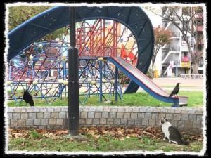 フォトコラム「黒猫にっき」第13巻