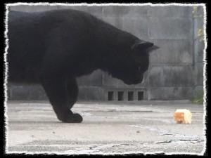 フォトコラム「黒猫にっき」第16巻〜パンとの遭遇〜