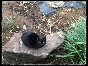 フォトコラム「黒猫にっき」第17巻〜 石の上にも三年猫 〜