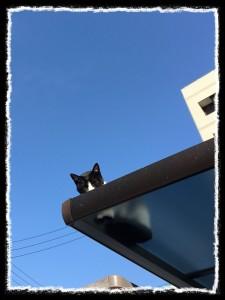 フォトコラム「黒猫にっき」第18巻〜 風にのった猫① 〜