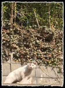 フォトコラム「黒猫にっき」第19巻 〜 竹やぶで暮らす猫 〜