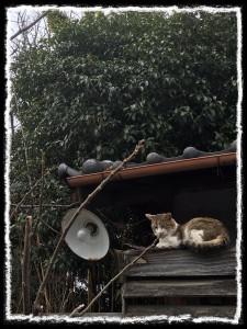 フォトコラム「黒猫にっき」第24巻〜 昼下がりは うとうと〜