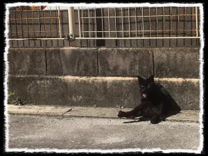 フォトコラム「黒猫にっき」第25巻〜昼さがり のほほん猫〜