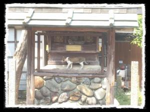 フォトコラム「黒猫にっき」第29巻〜 祈り〜