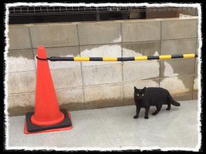 フォトコラム「黒猫にっき」第28巻〜雨んなか〜