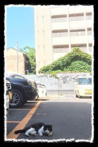 フォトコラム「黒猫にっき」第33巻〜 青いソラ〜