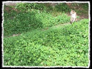 フォトコラム「黒猫にっき」第35巻〜しあわせの緑色の葉っぱ〜
