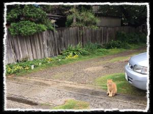 フォトコラム「黒猫にっき」第36巻〜 耳を澄ませば 〜