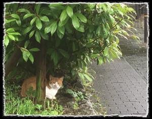 フォトコラム「黒猫にっき」第39巻〜 雨やどり 〜