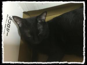 フォトコラム「黒猫にっき」第43巻〜 昼下がりも〜