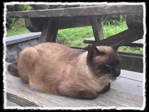 フォトコラム「黒猫にっき」第44巻〜鹿児島で出逢ったお猫さま〜
