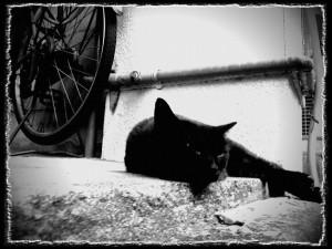 フォトコラム「黒猫にっき」第45巻〜 夏の想い出 〜