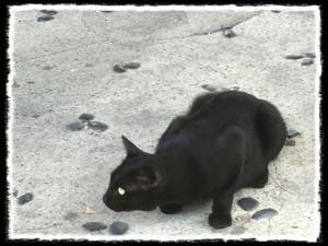 フォトコラム「黒猫にっき」第46巻〜 京美人 〜