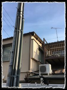 フォトコラム「黒猫にっき」第47巻〜 朱鷺に逢いたい 〜