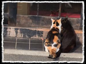 フォトコラム「黒猫にっき」第48巻〜 Love & Love 〜