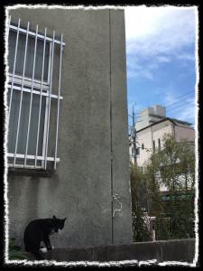 フォトコラム「黒猫にっき」第49巻〜 ソラを見上げて 〜