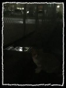 フォトコラム「黒猫にっき」第51巻〜 雨あがりの風が 〜