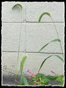 フォトコラム「黒猫にっき」第54巻〜 秋のソラ、ふたり 〜