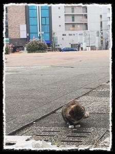 フォトコラム「黒猫にっき」第56巻〜 聴こえる〜